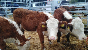 Стоян Чуканов: Помощта за говеждо месо да стане постоянна