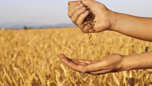 В Добруджа: Пшеницата е в добро състояние, но край морето има спешна нужда от дъжд - Agri.bg