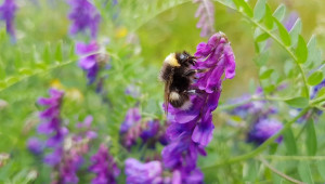 Учени: Пчелите планират събирането на нектар
