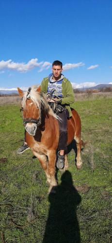 Продавам  коне ! Две кобили и един жребец ! - Снимка 9