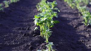 Картофопроизводителите питат: Какво правим, ако нямаме достъп до вода?
