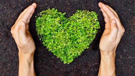 Преди да изберем нашите екосхеми: Идеи за прилагане - Agri.bg