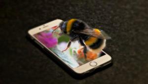 Пчеларските притеснения не спират с новата платформа – напротив