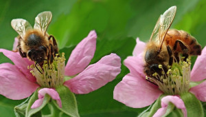 Настояване: Всички пчелни семейства да получават средствата