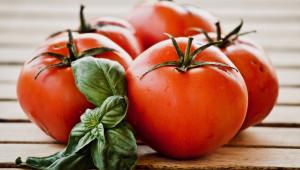 Ранни сортове домати
