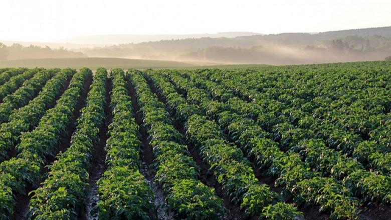 От 9 март тръгва прием по схемата за контрол на вредители по картофите