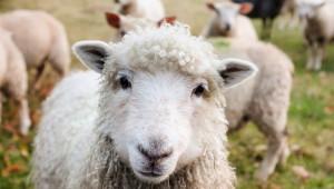 Важно! Регистрирахте ли животновъдните си обекти?
