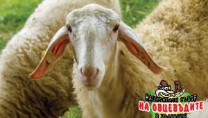 Над 1000 чистопородни животни ще покаже Съборът на овцевъдите