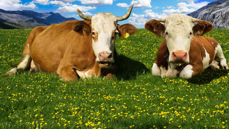 Какво ни казахте: Ниските изкупни цени отчайват животновъдите