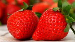 Изисквания към климат, месторастениe и почва за отглеждане на ягоди