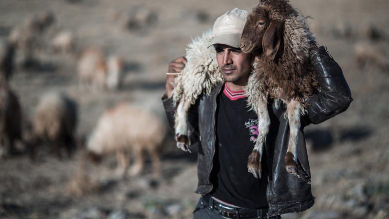 Нови критерии: Кой може да участва в Съвета по животновъдство?