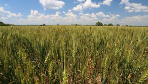 Украйна не иска руска пшеница
