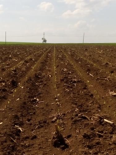 Купувам Зем. Земя -от собственици в гр.КНЕЖА - Снимка 1