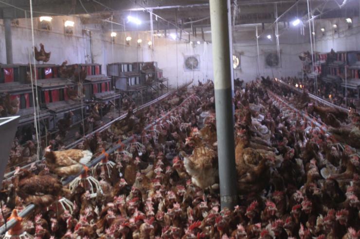 Продавам ферма за кокошки носачки - Снимка 6
