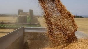 Зърното в Черноморския басейн продължава да губи позиции