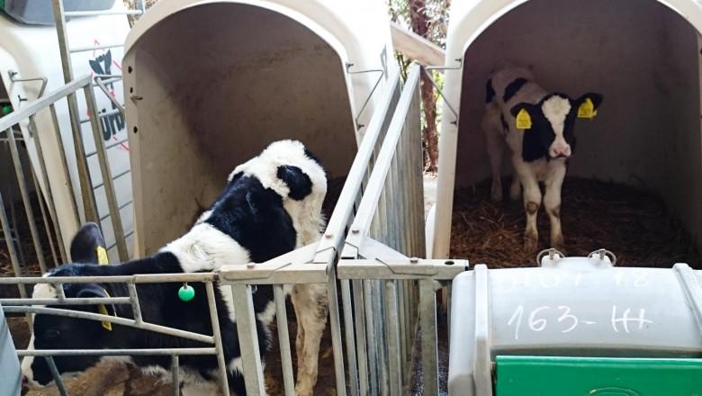 Цената на млякото отказва фермерите, ликвидират млечни стада