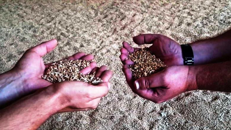 Цената на зърното расте, започнаха сделки на зелено в Добруджа