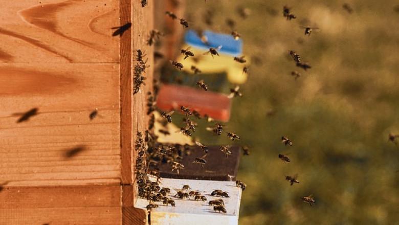 Изследване: Дървените пчелни кошери са неефикасни
