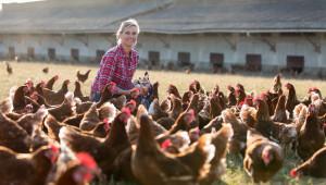 Увеличават се малките стопанства с до 200 пилета за месо