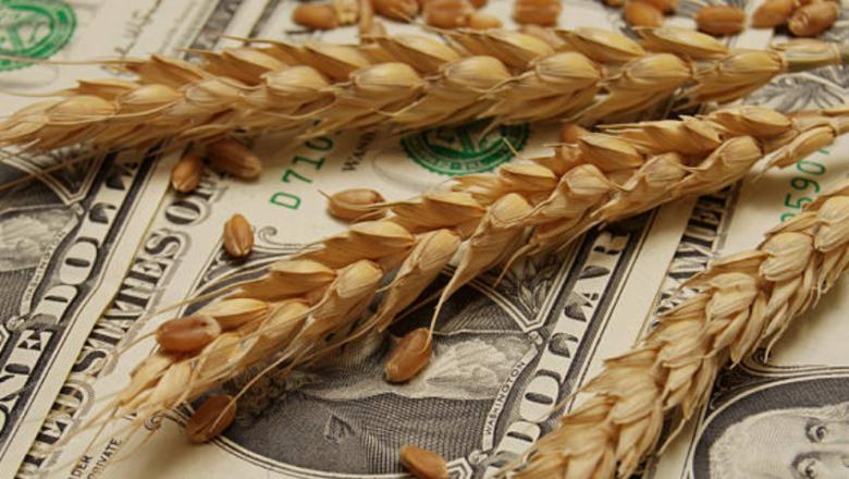 Борси: Положителните очаквания продължават да свалят цените на зърното