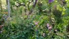 Богата овощна градина до двореца Кричим с оборудван фургон - Снимка 5