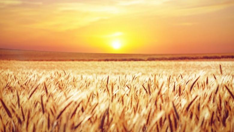 Rabobank: Фермерите в цял свят очакват огромна печалба тази година