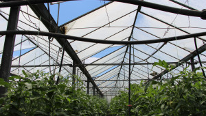 Георги Кафтанов: Благодарение на розовия домат нещата ще станат по-розови - Снимка 8
