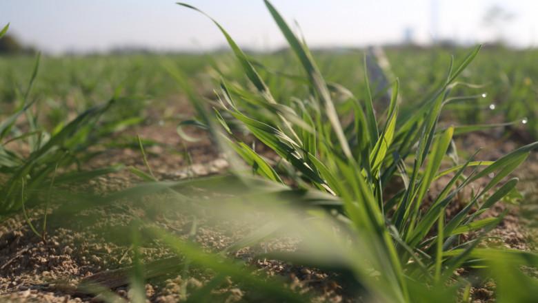 Нов фунгицид защитава посевите от болести