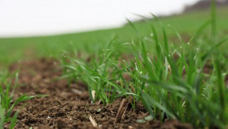 Помислете за есенната сеитба на житните култури отсега - Agri.bg