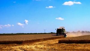 Добруджа произведе близо 750 000 тона зърно от пшеница