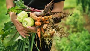Агроиновации: Умно управление на вредителите