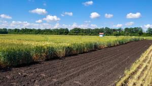 В очакване: Какви ще са рентите в Добруджа през 2021 г.? - Agri.bg