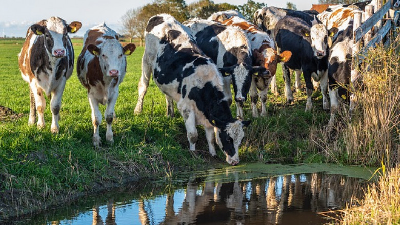 До няколко години кравите ще използват специална тоалетна