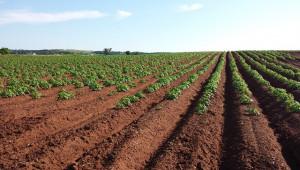 Фермер поиска 20 000 евро за хектар земя