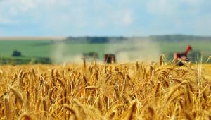 """ОД """"Земеделие"""" организира конкурс за малките художници на Златна Добруджа"""