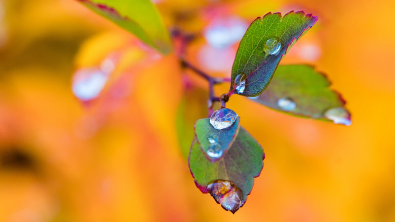 Стопанин: Влажното време през есента помага на овощарите